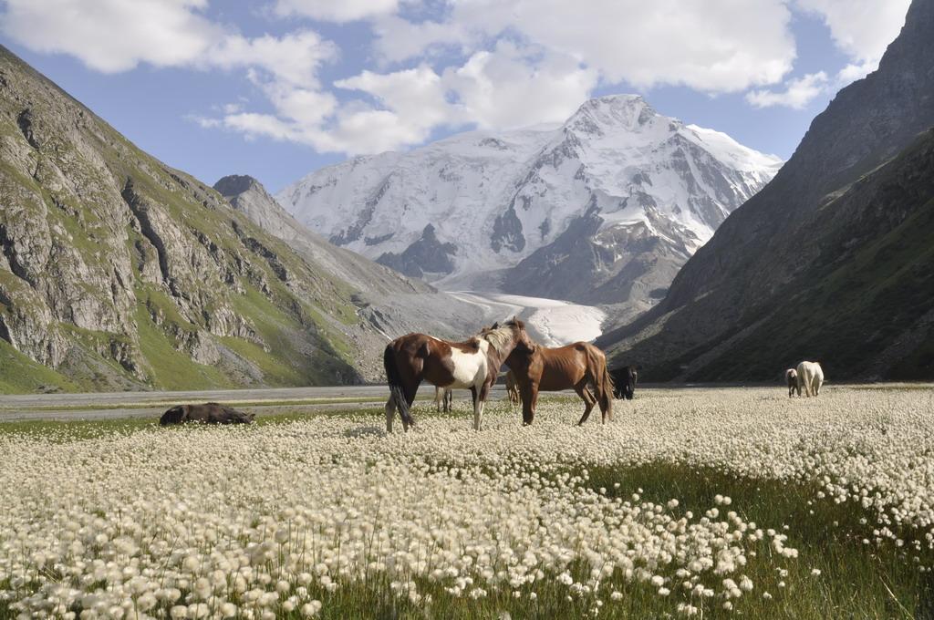 08_Kirgizsko 6625