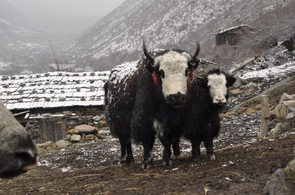 14_Nepal_Kancendzonga 30403