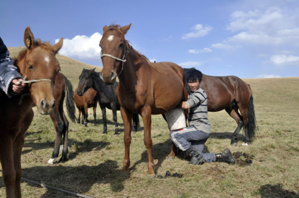Okolie jazera Son Kol v Kirgzisku je známe jurtami a pastiermi dojacimi kumys - kobylie mlieko_resize