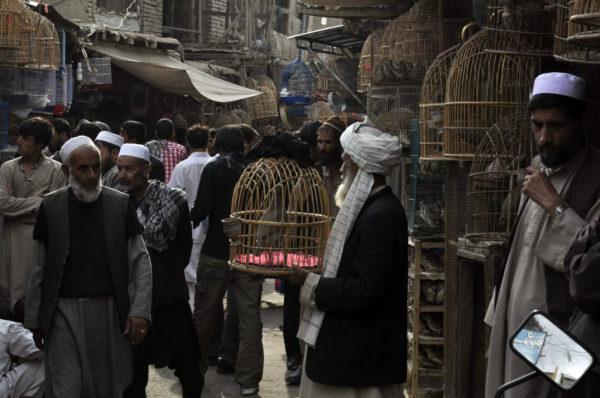 Trh s vtákmi bol najzaujímavejším miestom v afganskom Kábule, aké som navštívil._resize